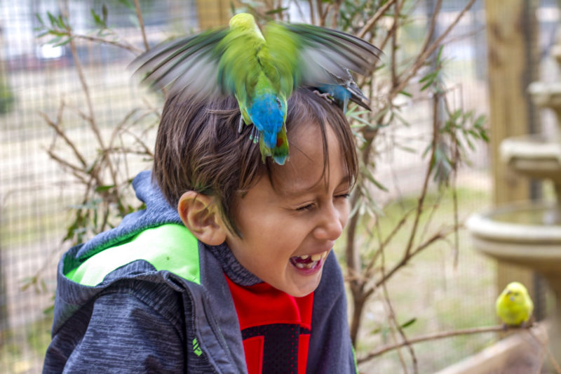 A youngster is all giggles as a pair of colorful lorikeets perch on her head at the Emerald Coast Zoo in Crestview.